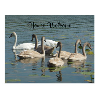 You're Welcome Family Flock of Swans Postcard