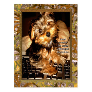 YouTube Yorkie Postcard
