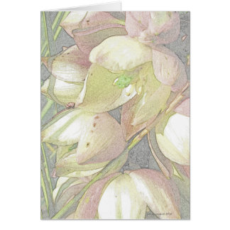 Yucca Blooms in Colored Pencil Card