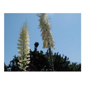 yucca postcard