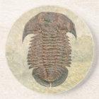 Yuepingia Fossil Trilobite Coaster