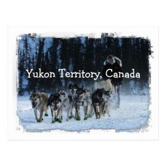 Yukon Quest Dogsled Team; Yukon Territory, Canada Postcard