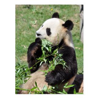 Yum Bamboo! Panda Postcard
