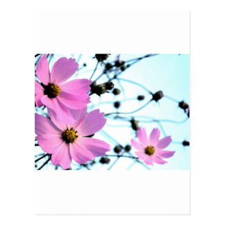 """YUMMY MUMMY "" FLORAL PRODUCTS POSTCARD"