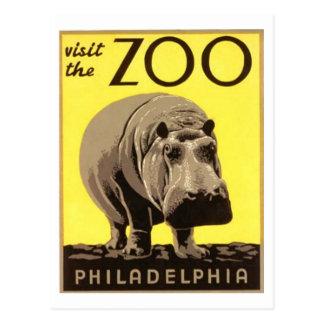 Z00 - Hippo Postcard
