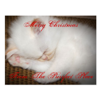 zazzle, Merry ChristmasFrom The Purrfect Place Postcard