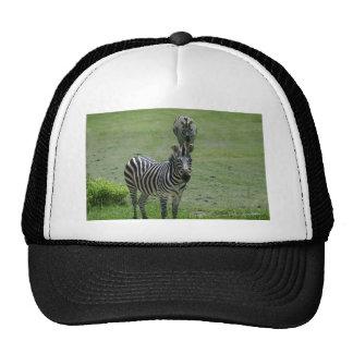 zebra-2-1 trucker hat