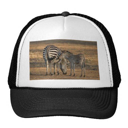 Zebra and foal - South Luwanga Hat