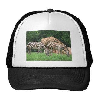 Zebra and Giraffe Trucker Hat