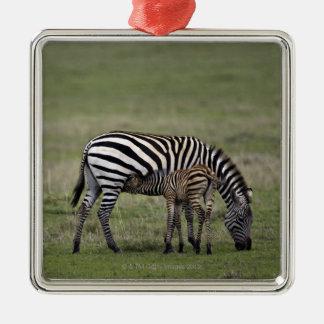 Zebra and nursing foal, Tanzania Metal Ornament
