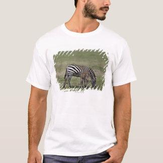 Zebra and nursing foal, Tanzania T-Shirt