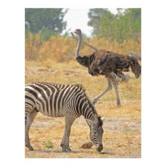 Zebra and Ostrich TomWurl.jpg Letterhead
