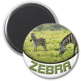 Zebra and zebra foal wildlife safari magnets