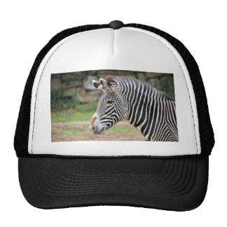 Zebra animal mesh hat