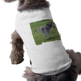 Zebra Attitude  Pet Shirts Pet T Shirt