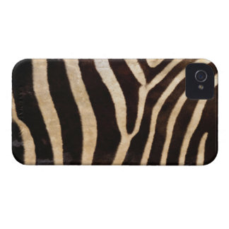 Zebra Body Fur Skin BlackBerry Bold Case Cover