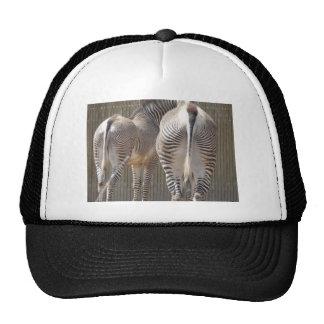 zebra butts trucker hats