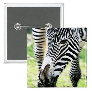 Zebra, close-up, selective focus 2 inch square button
