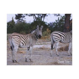 Zebra Double Take Photo Canvas Print