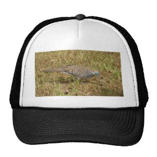 Zebra Dove Trucker Hat