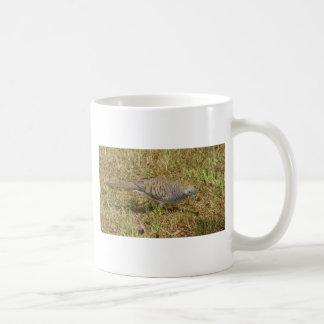 Zebra Dove Mug
