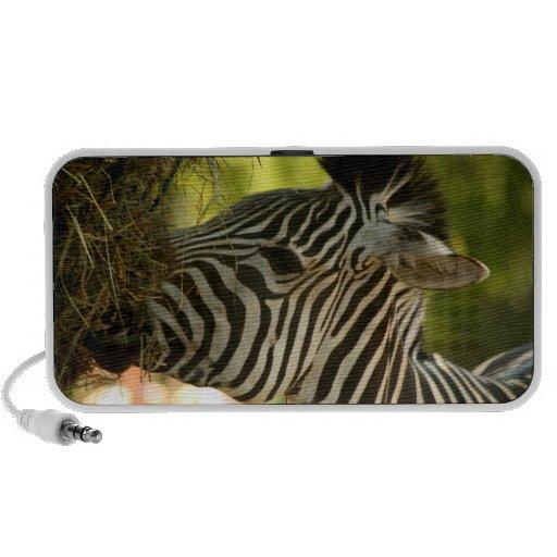 Zebra Eating Doodle Speaker