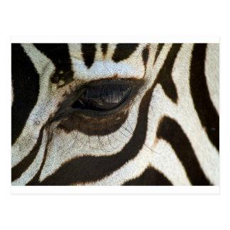 Zebra eye cute serene image postcard