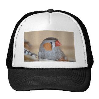 Zebra Finch Hats