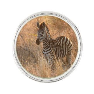 Zebra foal in morning light lapel pin