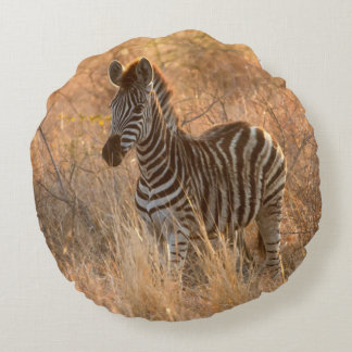 Zebra foal in morning light round pillow