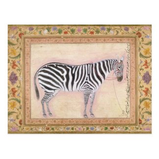 Zebra, from the 'Minto Album', 1621 (gouache on pa Postcard