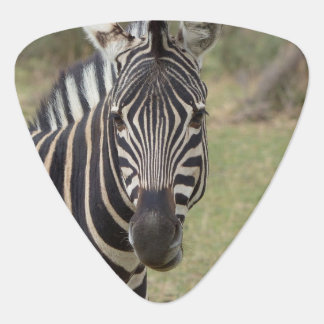 zebra guitar pick