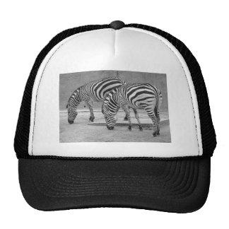 Zebra Hats