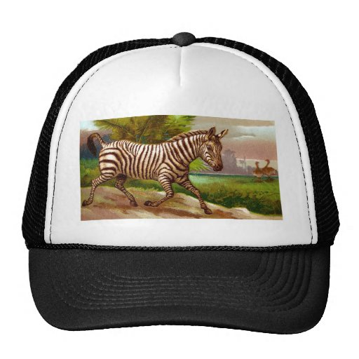 Zebra Mesh Hat