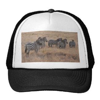 Zebra in Kenya Hats