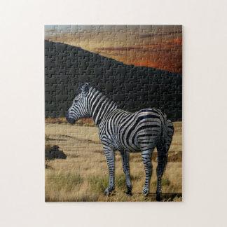 Zebra in Kenya. Jigsaw Puzzle