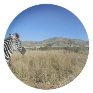 Zebra in open plain, Pilansberg National Park, Dinner Plates