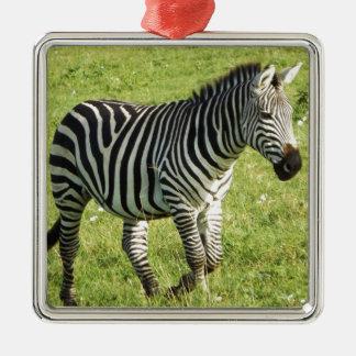 zebra in Serengeti.,Ngorongoro Crater Metal Ornament