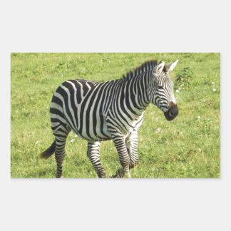 zebra in Serengeti.,Ngorongoro Crater Rectangular Stickers