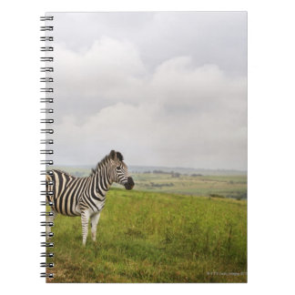 Zebra in the countryside, South Africa Note Books
