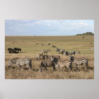 Zebra in the Serengeti in Tanzania Poster