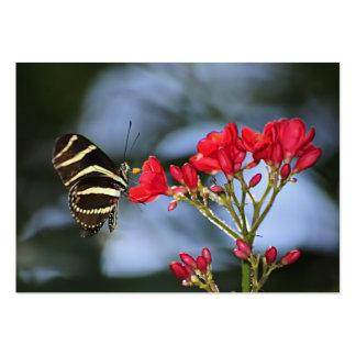 Zebra Longwing Butterfly - ACEO 14 Large Business Cards (Pack Of 100)