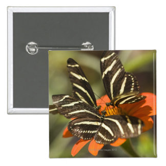 Zebra Longwing (heliconius charitonia) on flower 2 Inch Square Button
