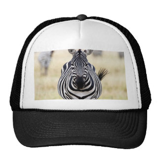 Zebra looking at you trucker hat