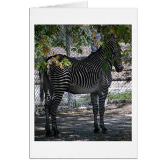 Zebra Love Card