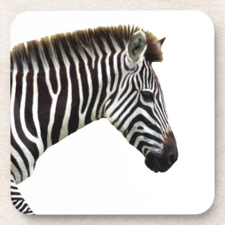 zebra-on-the-masai-mara coaster