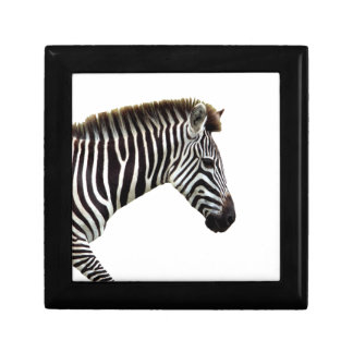 zebra-on-the-masai-mara gift box