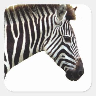 zebra-on-the-masai-mara square sticker