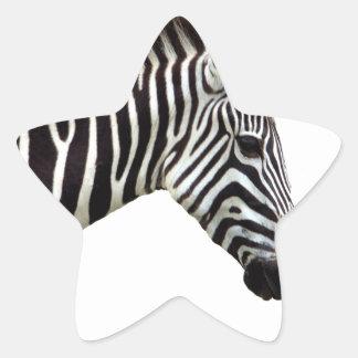 zebra-on-the-masai-mara star sticker
