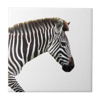 zebra-on-the-masai-mara tile